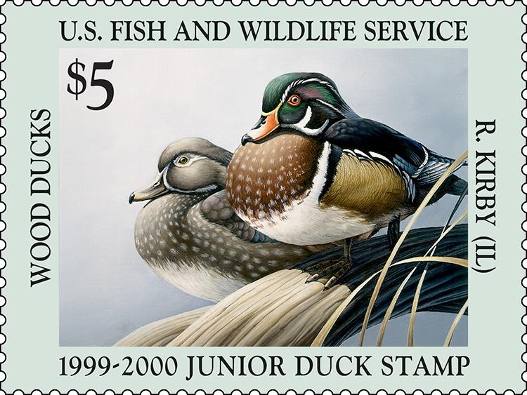 Species: Wood ducks