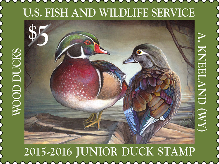 Species: Wood ducks