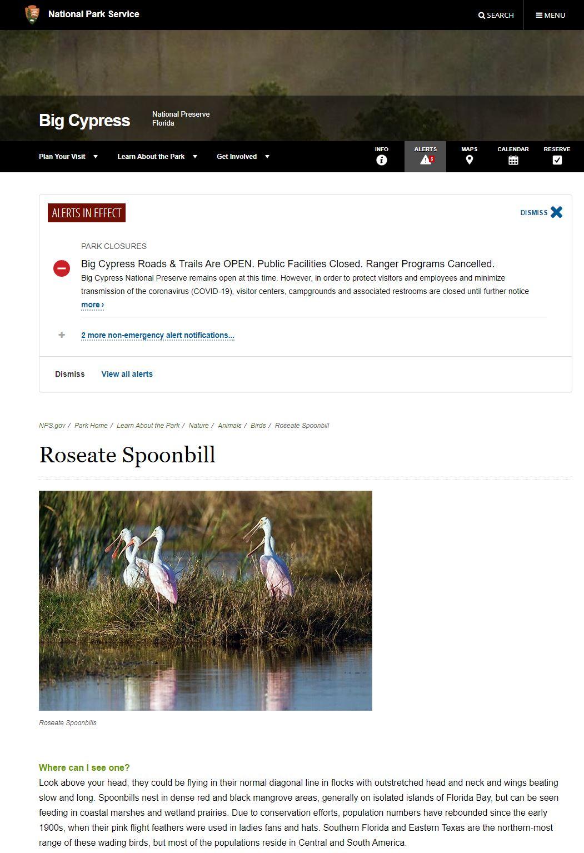 Spoonbill Activity